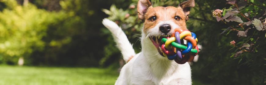 Dog-Friendly-Header-Image