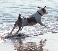 Dogs-Free-Offer-Tile