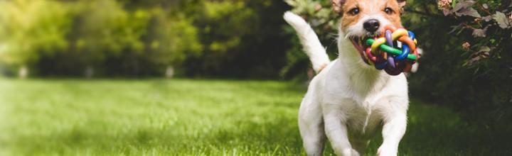 Dog Friendly Accommodation in Devon