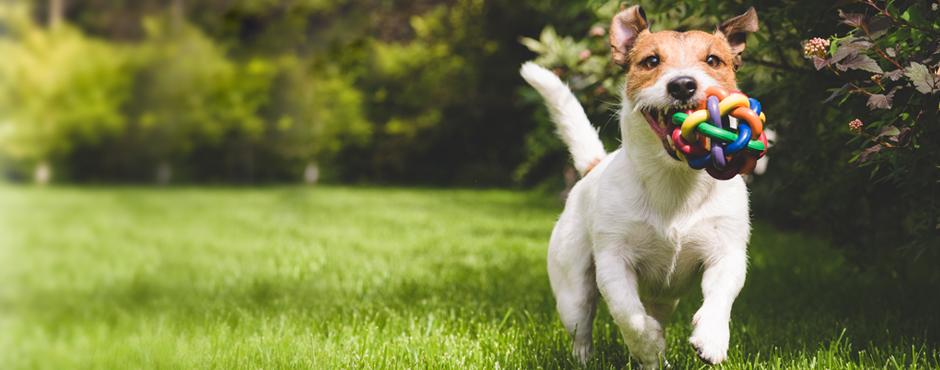 Amber-House-dog-friendly-Slider